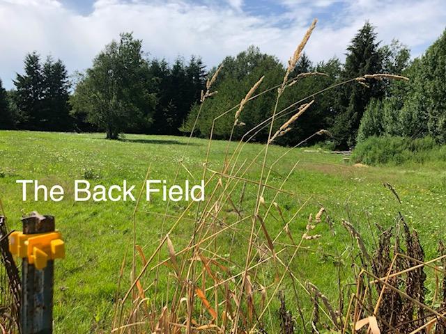 45-back field