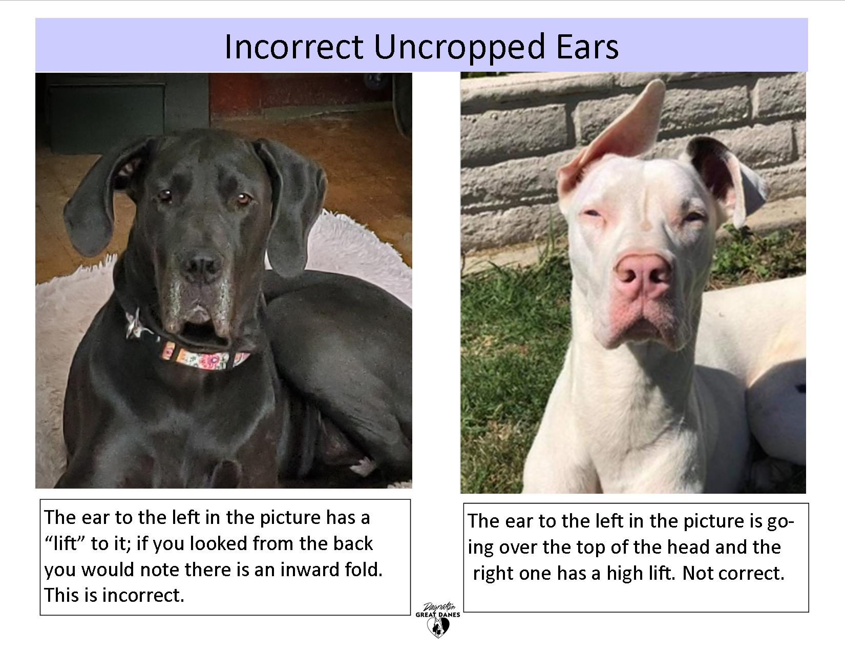 Incorrect untaped ears